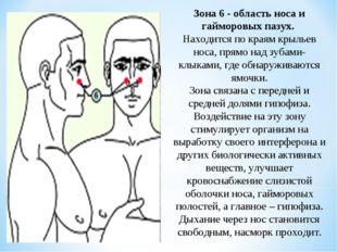 Зона 6 - область носа и гайморовых пазух. Находится по краям крыльев носа, пр