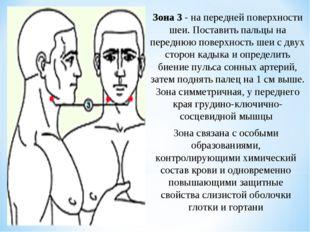 Зона 3 - на передней поверхности шеи. Поставить пальцы на переднюю поверхност