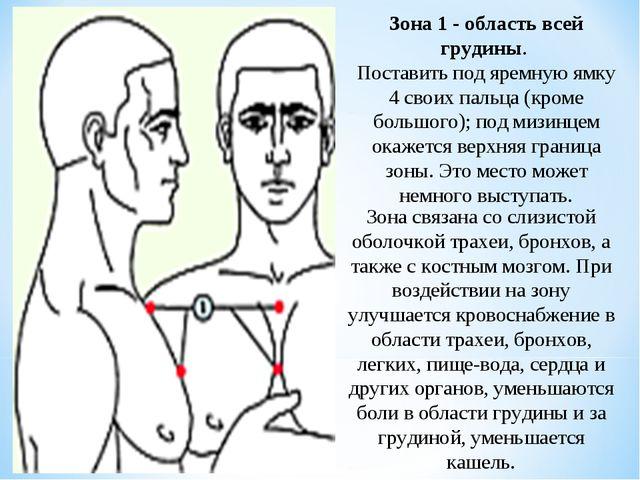 Зона 1 - область всей грудины. Поставить под яремную ямку 4 своих пальца (кро...