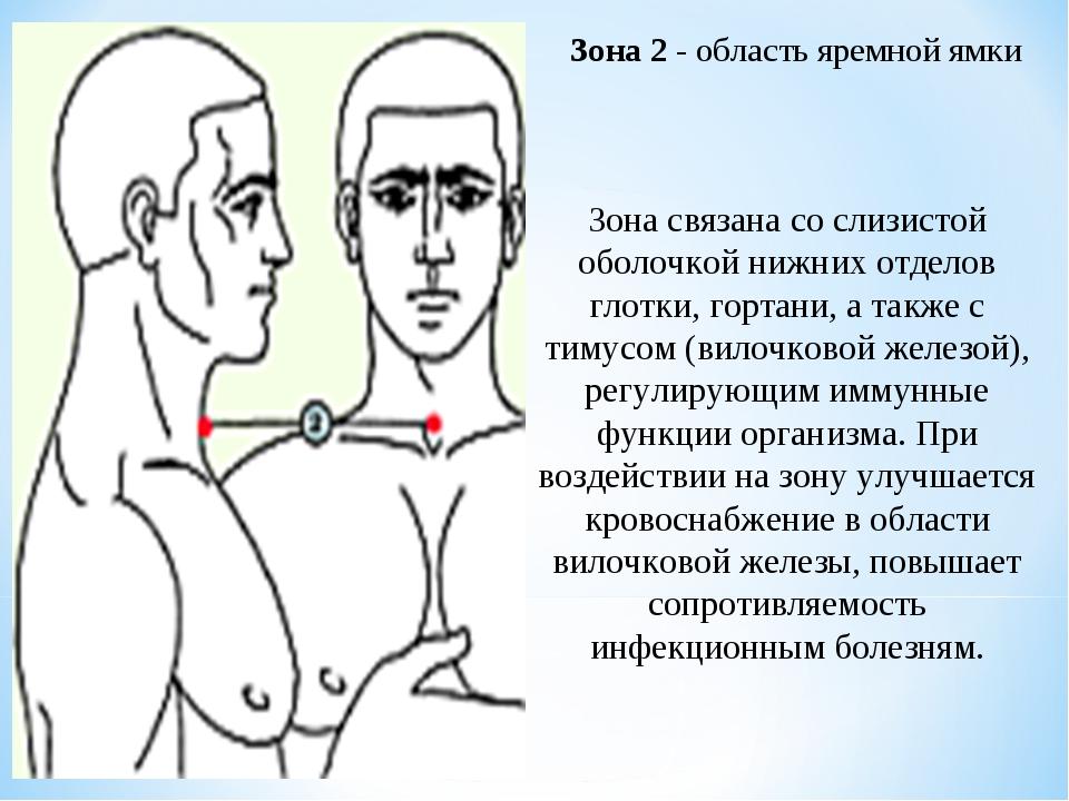 Зона 2 - область яремной ямки Зона связана со слизистой оболочкой нижних отде...