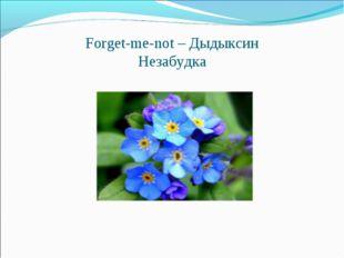 Forget-me-not – Дыдыксин Незабудка