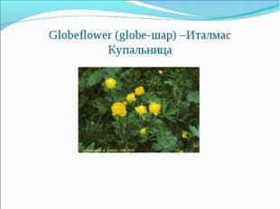 Globeflower (globe-шар) –Италмас Купальница