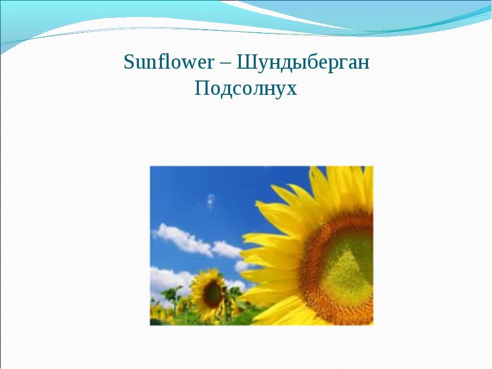 Sunflower – Шундыберган Подсолнух