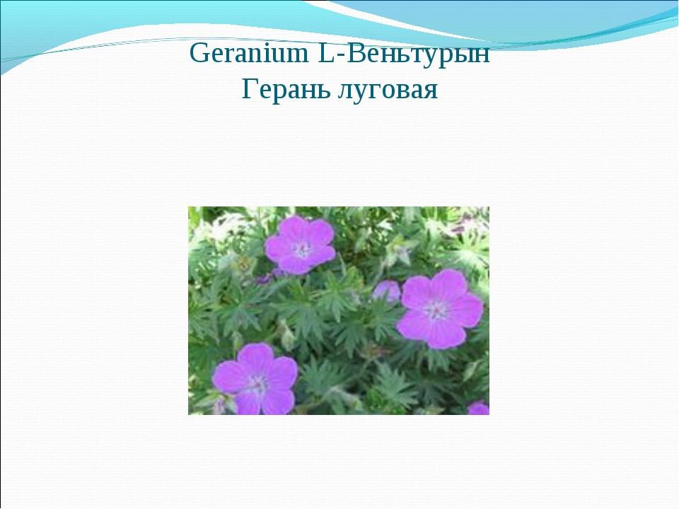 Geranium L-Веньтурын Герань луговая