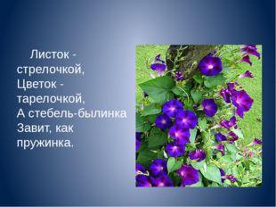 Листок - стрелочкой, Цветок - тарелочкой, А стебель-былинка Завит, как пр