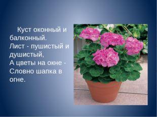 Куст оконный и балконный. Лист - пушистый и душистый, А цветы на окне - Слов
