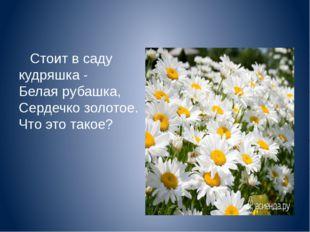 Стоит в саду кудряшка - Белая рубашка, Сердечко золотое. Что это такое?
