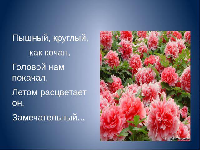 Пышный, круглый, как кочан, Головой нам покачал. Летом расцветает он, Замеча...