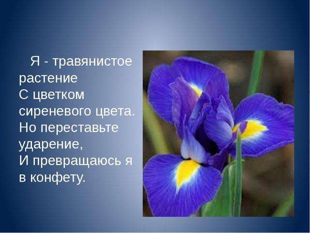 Я - травянистое растение С цветком сиреневого цвета. Но переставьте ударен...