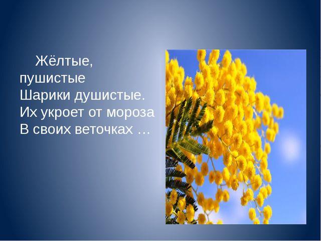 Жёлтые, пушистые Шарики душистые. Их укроет от мороза В своих веточках …