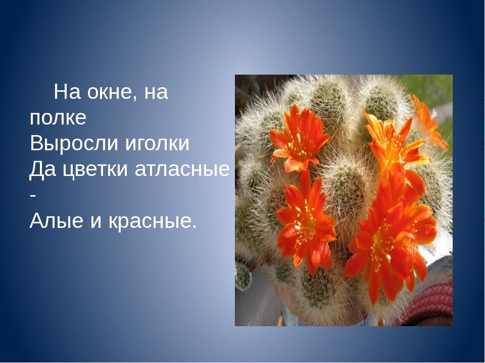 На окне, на полке Выросли иголки Да цветки атласные - Алые и красные.