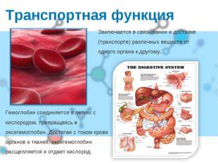 Транспортная функция Гемоглобин соединяется в легких с кислородом, превращаяс