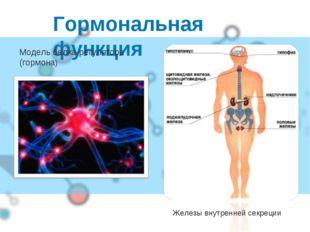 Гормональная функция Железы внутренней секреции Модель белка-регулятора (горм
