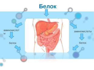 Белок аминокислоты аминокислоты белок белок