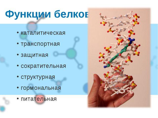 Функции белков каталитическая транспортная защитная сократительная структурна...