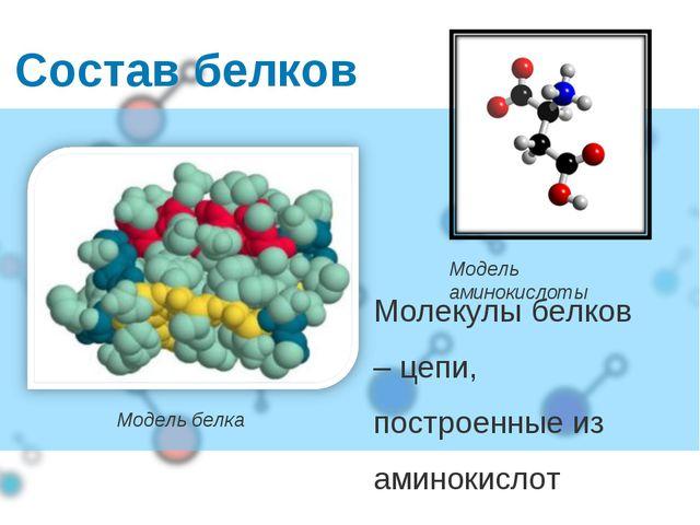 Молекулы белков – цепи, построенные из аминокислот Состав белков Модель белка...