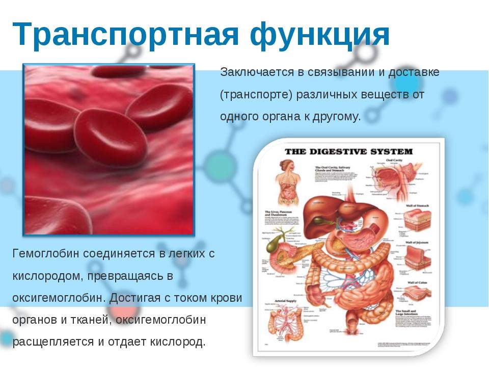 Транспортная функция Гемоглобин соединяется в легких с кислородом, превращаяс...