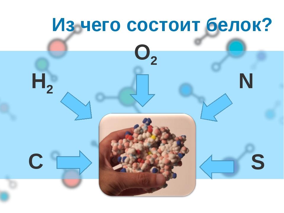 Из чего состоит белок? O2 N C H2 S