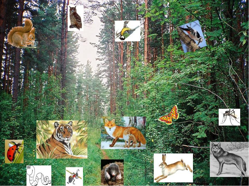 них картинки лесного сообщества языке