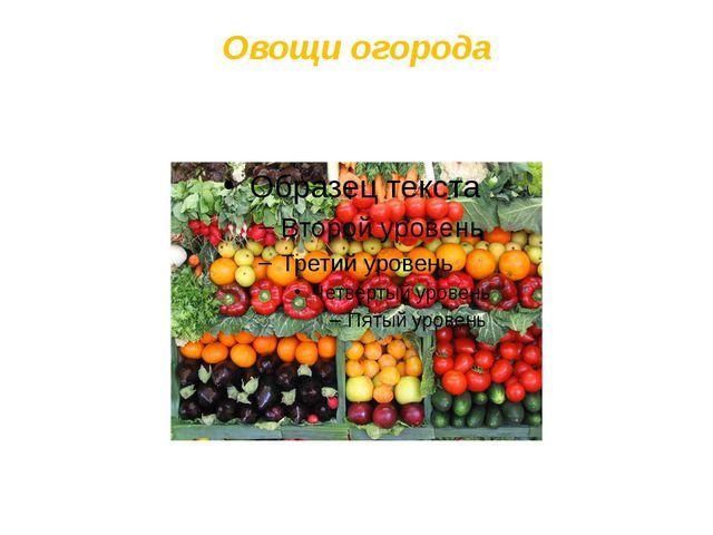 Овощи огорода