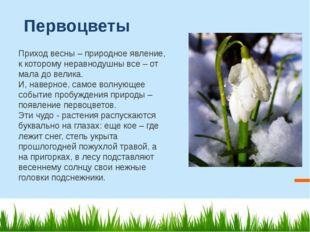 Первоцветы Приход весны – природное явление, к которому неравнодушны все – от