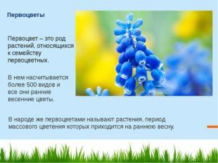 Первоцветы Первоцвет – это род растений, относящихся к семейству первоцветны