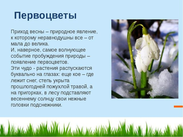 Первоцветы Приход весны – природное явление, к которому неравнодушны все – от...