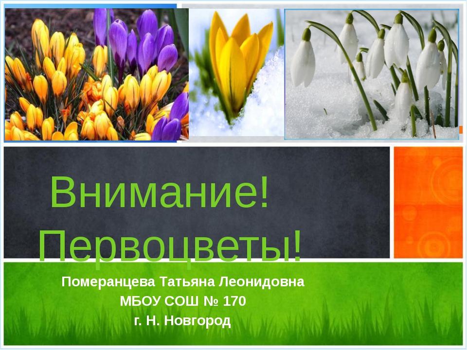 Внимание! Первоцветы! Померанцева Татьяна Леонидовна МБОУ СОШ № 170 г. Н. Но...
