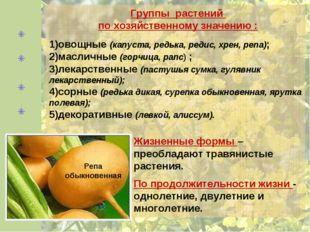 Группы растений по хозяйственному значению : овощные (капуста, редька, редис,