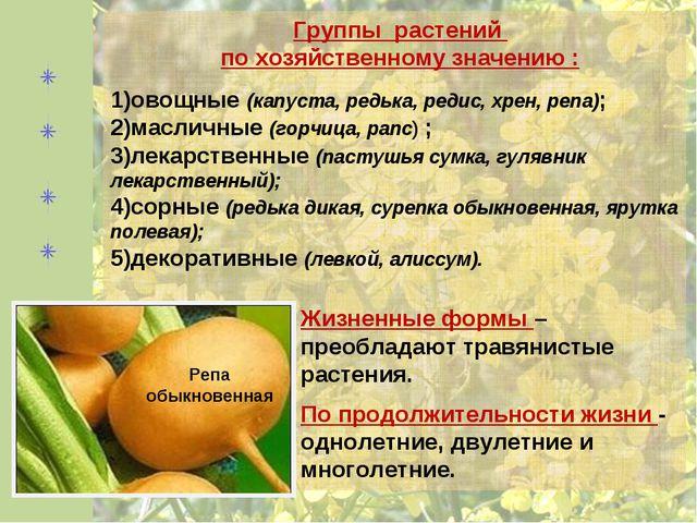 Группы растений по хозяйственному значению : овощные (капуста, редька, редис,...