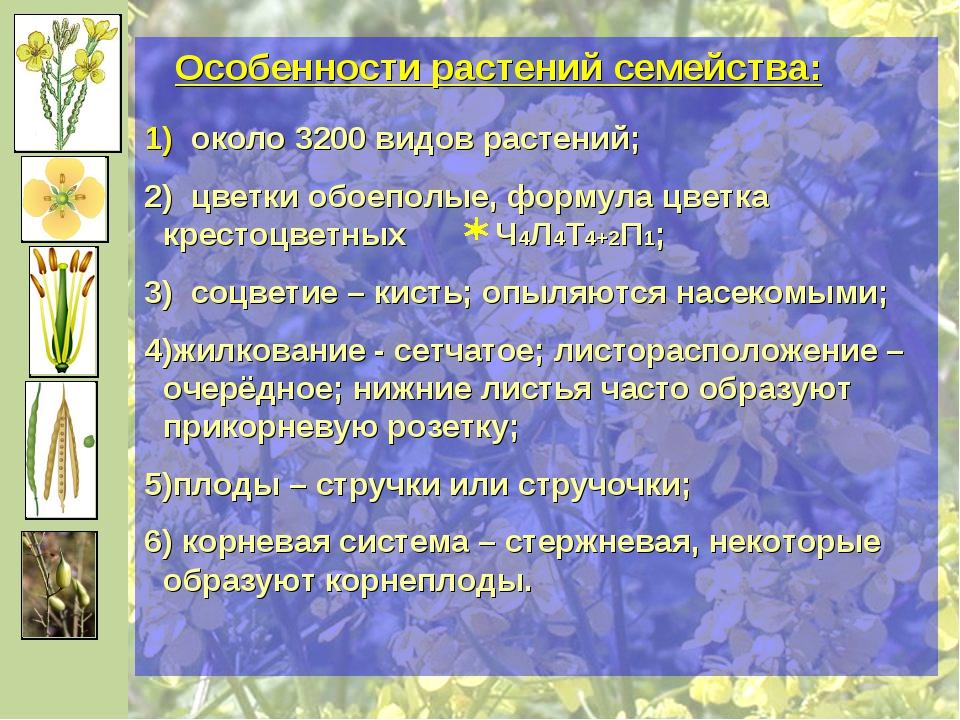 Особенности растений семейства: около 3200 видов растений; цветки обоеполые,...