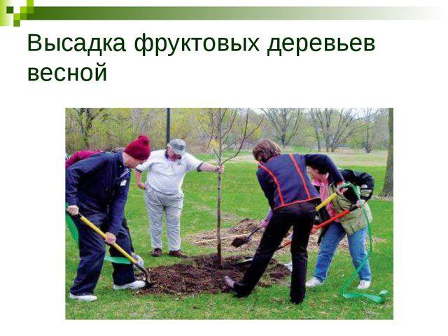 Высадка фруктовых деревьев весной