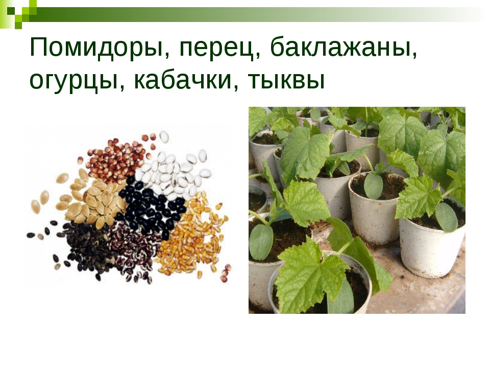 Помидоры, перец, баклажаны, огурцы, кабачки, тыквы