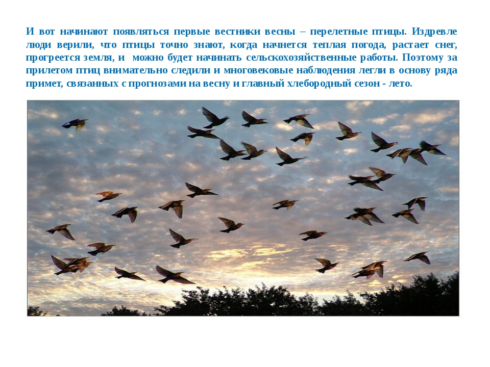 И вот начинают появляться первые вестники весны – перелетные птицы. Издревле...