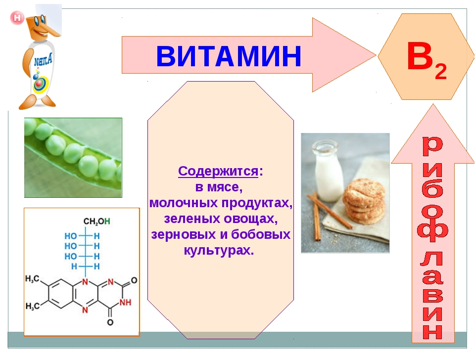 ВИТАМИН B2 Содержится: в мясе, молочных продуктах, зеленых овощах, зерновых и...