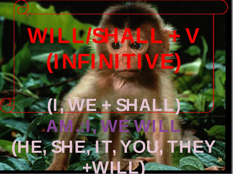 WILL/SHALL + V (INFINITIVE) (I, WE + SHALL) AM.:I, WE WILL (HE, SHE, IT, YOU,...