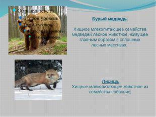 Бурый медведь.  Хищное млекопитающее семейства медведей лесное животное, жив