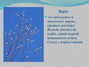 Верба - это небольшое и невысокое дерево, среднего размера. Весной, именно н