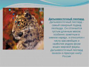 Дальневосточный леопард. Дальневосточный леопард - самый северный подвид леоп