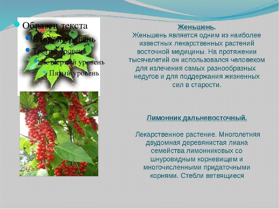 Женьшень. Женьшень является одним из наиболее известных лекарственных растени...