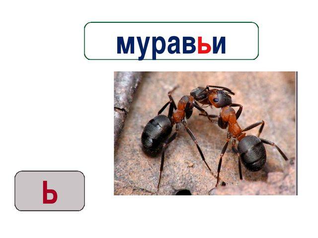 Ь муравьи