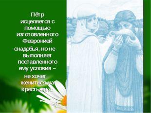 Пётр исцеляется с помощью изготовленного Февронией снадобья, но не выполняет