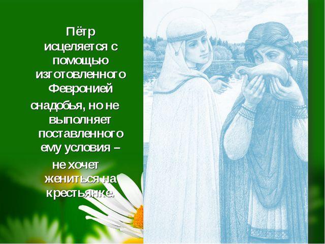 Пётр исцеляется с помощью изготовленного Февронией снадобья, но не выполняет...