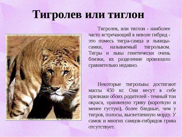 Тигролев или тиглон Тигролев, или тиглон - наиболее часто встречающий в нево...