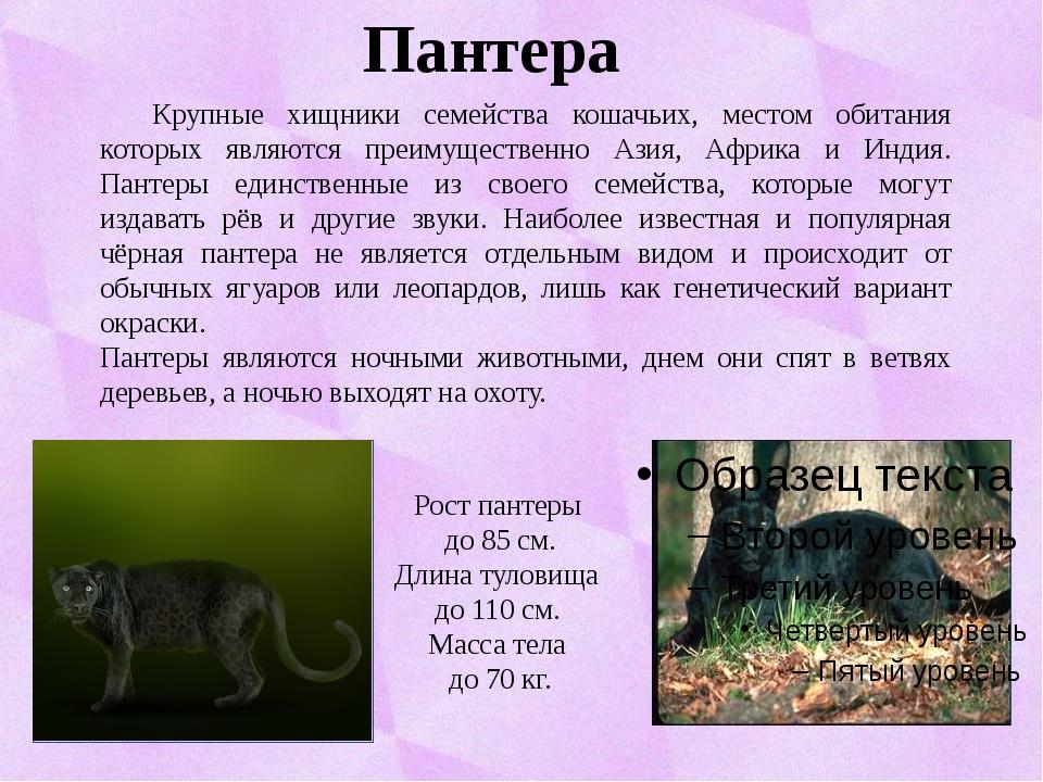 Пантера Крупные хищники семейства кошачьих, местом обитания которых являются...