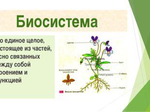 Биосистема Это единое целое, состоящее из частей, тесно связанных между собой
