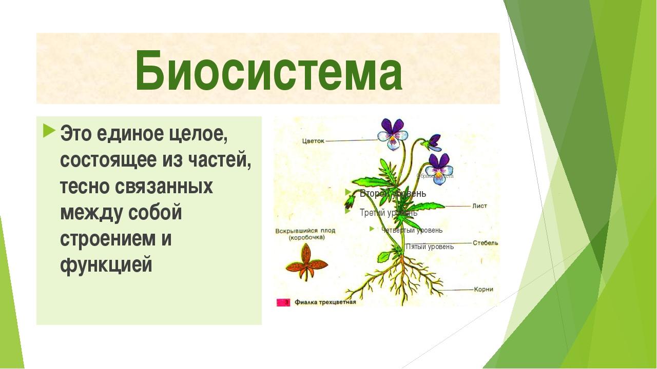 Биосистема Это единое целое, состоящее из частей, тесно связанных между собой...