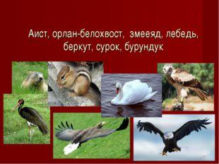 Аист, орлан-белохвост, змееяд, лебедь, беркут, сурок, бурундук