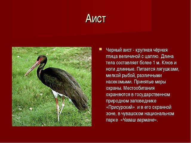 Аист Черный аист - крупная чёрная птица величиной с цаплю. Длина тела составл...