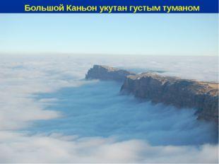 Большой Каньон укутан густым туманом